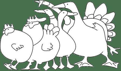 poulet à cuire